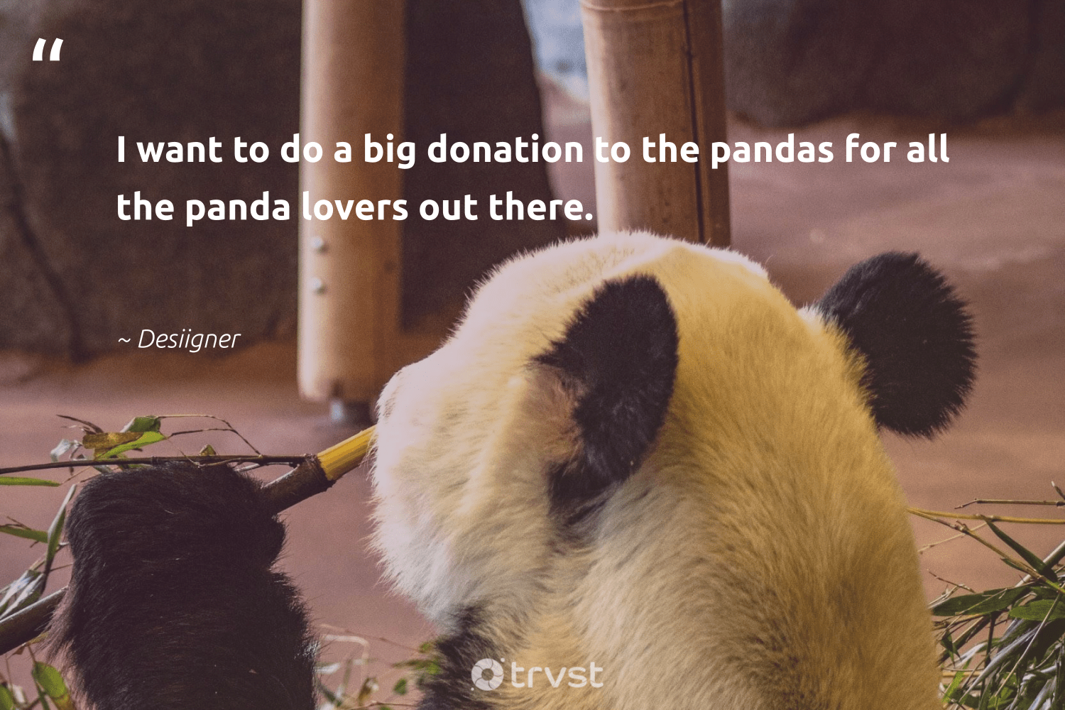 """""""I want to do a big donation to the pandas for all the panda lovers out there.""""  - Desiigner #trvst #quotes #bearlove #dosomething #bears #beinspired #wild #socialimpact #wildlifeprotection #thinkgreen #sustainability #collectiveaction"""