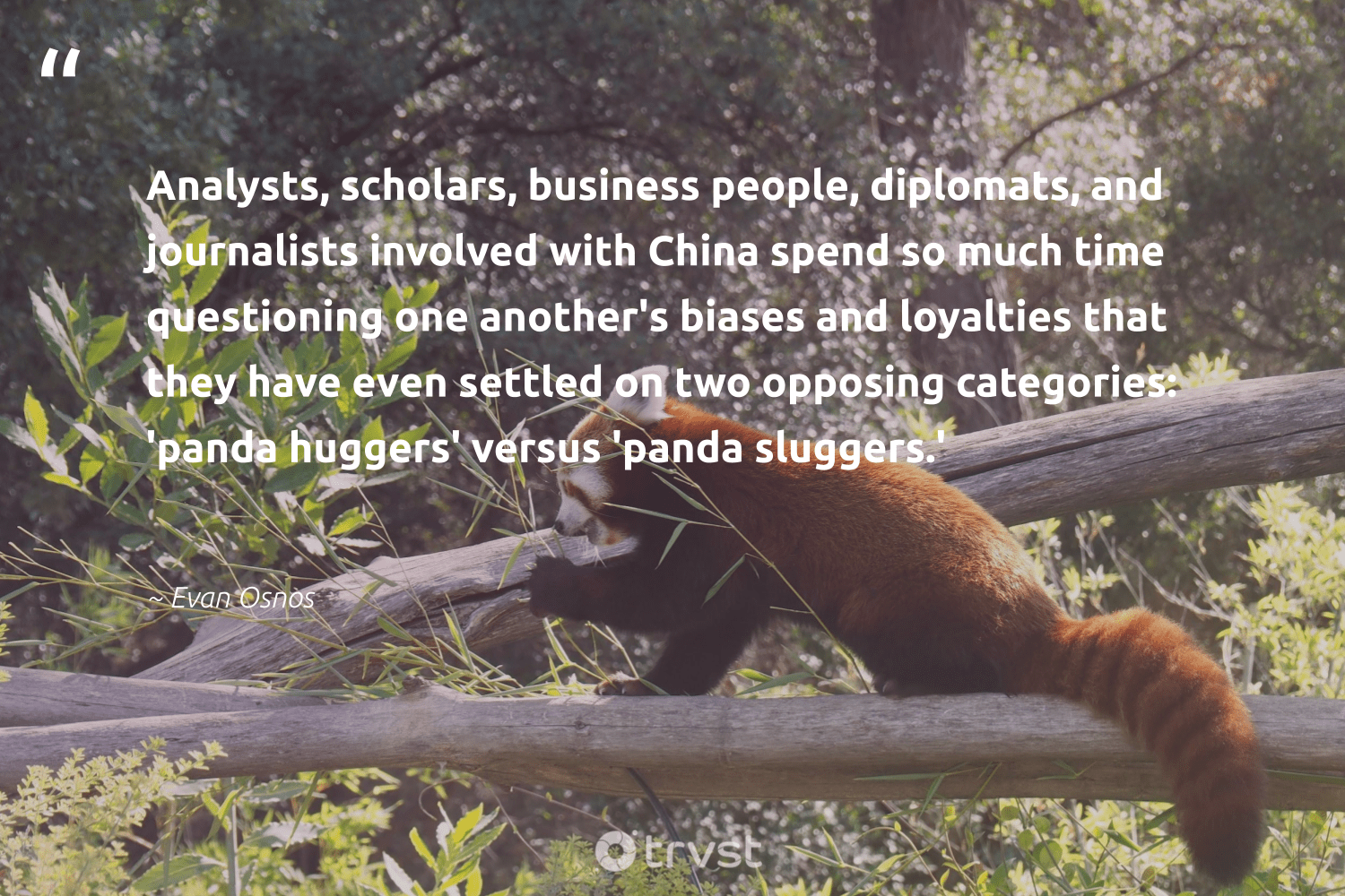 """""""Analysts, scholars, business people, diplomats, and journalists involved with China spend so much time questioning one another's biases and loyalties that they have even settled on two opposing categories: 'panda huggers' versus 'panda sluggers.'""""  - Evan Osnos #trvst #quotes #majesticwildlife #takeaction #bears #dosomething #protectnature #bethechange #bearlove #dogood #perfectnature #ecoconscious"""