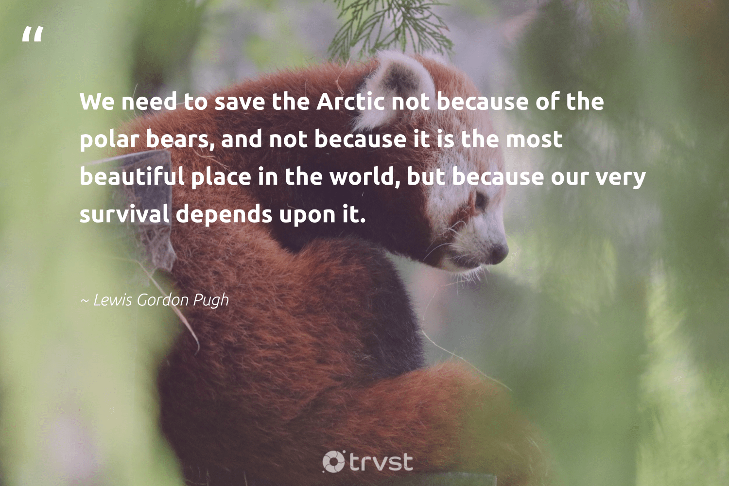 """""""We need to save the Arctic not because of the polar bears, and not because it is the most beautiful place in the world, but because our very survival depends upon it.""""  - Lewis Gordon Pugh #trvst #quotes #arctic #bears #animalphotography #dotherightthing #sustainability #takeaction #bearlove #dogood #ourplanetdaily #socialchange"""
