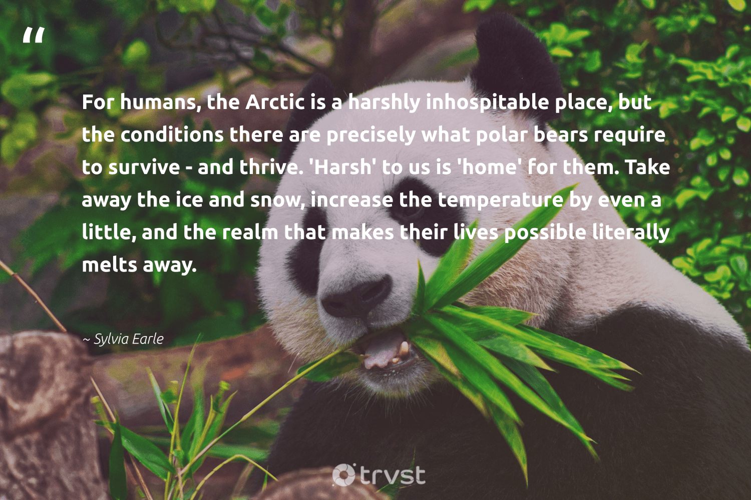 """""""For humans, the Arctic is a harshly inhospitable place, but the conditions there are precisely what polar bears require to survive - and thrive. 'Harsh' to us is 'home' for them. Take away the ice and snow, increase the temperature by even a little, and the realm that makes their lives possible literally melts away.""""  - Sylvia Earle #trvst #quotes #arctic #snow #bears #weather #conservation #wildernessnation #socialchange #extremeweather #sustainability #eco"""