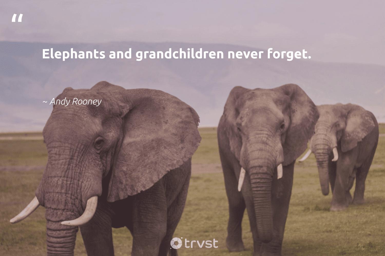 """Elephants and grandchildren never forget.""  - Andy Rooney #trvst #quotes #elephants #explore #thinkgreen #animals #socialimpact #elephant #ecoconscious #wildlife #bethechange #naturelovers"