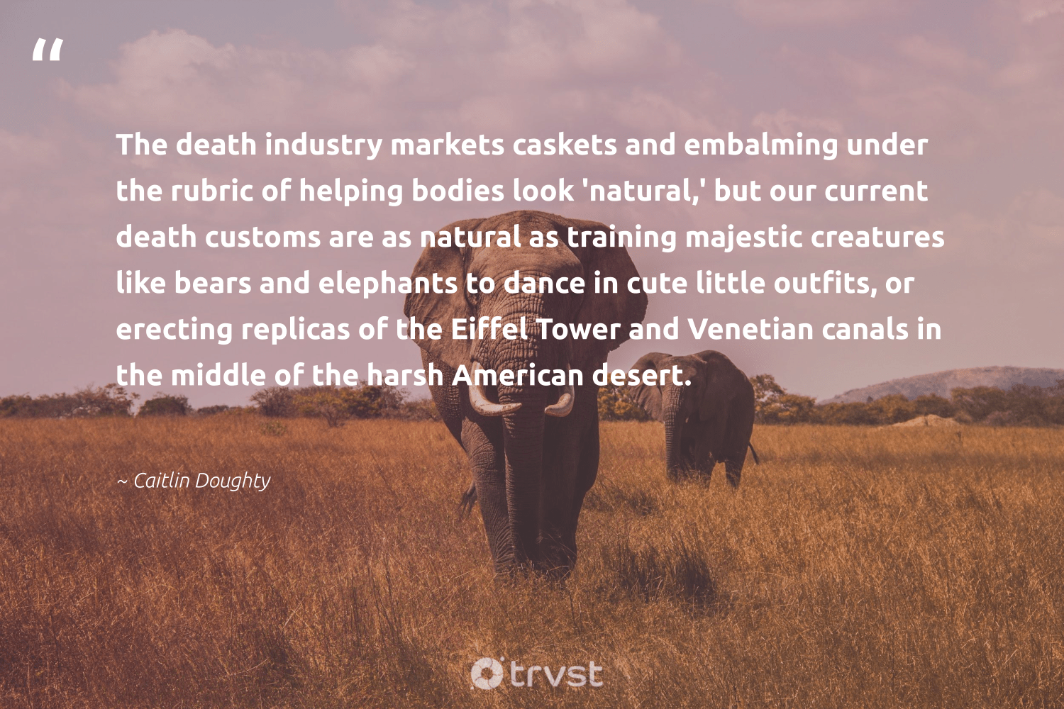"""""""The death industry markets caskets and embalming under the rubric of helping bodies look 'natural,' but our current death customs are as natural as training majestic creatures like bears and elephants to dance in cute little outfits, or erecting replicas of the Eiffel Tower and Venetian canals in the middle of the harsh American desert.""""  - Caitlin Doughty #trvst #quotes #natural #elephants #endangered #bethechange #wildlife #dogood #elephantlove #socialchange #elephant #takeaction"""