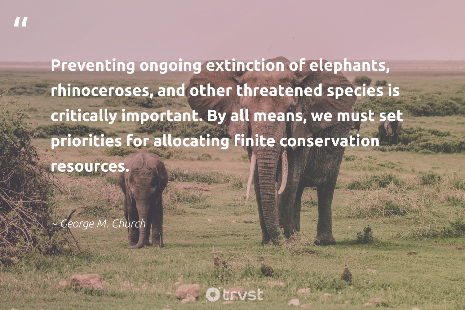 """""""Preventing ongoing extinction of elephants, rhinoceroses, and other threatened species is critically important. By all means, we must set priorities for allocating finite conservation resources.""""  - George M. Church #trvst #quotes #conservation #extinction #elephants #earth #elephantlove #volunteer #planetearthfirst #nature #explore #sustainableliving"""