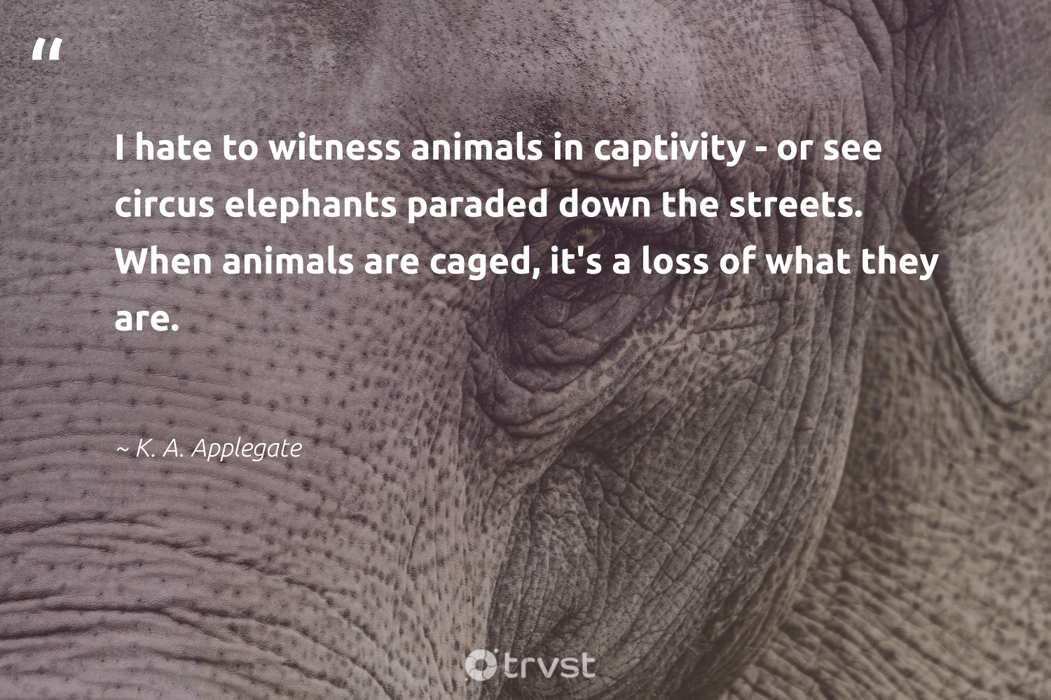 """""""I hate to witness animals in captivity - or see circus elephants paraded down the streets. When animals are caged, it's a loss of what they are.""""  - K. A. Applegate #trvst #quotes #animals #elephants #wildlife #conservation #forscience #collectiveaction #animallovers #elephantlover #natural #socialchange"""