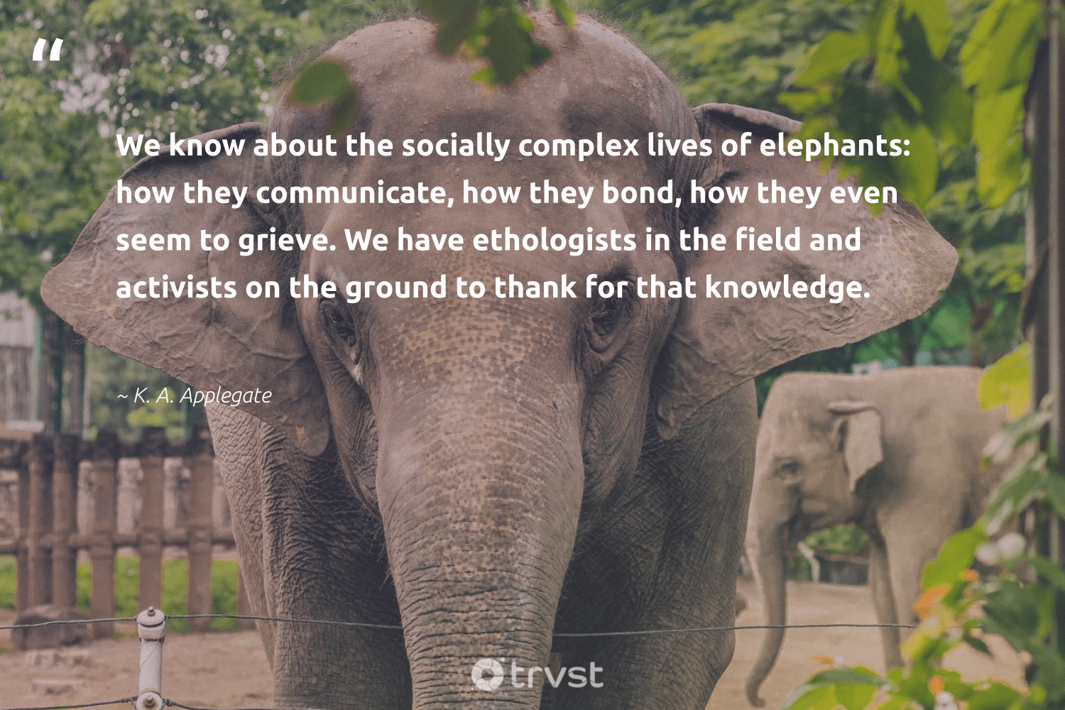 """""""We know about the socially complex lives of elephants: how they communicate, how they bond, how they even seem to grieve. We have ethologists in the field and activists on the ground to thank for that knowledge.""""  - K. A. Applegate #trvst #quotes #elephantlover #dosomething #naturelovers #changetheworld #animals #thinkgreen #wildanimals #bethechange #mammals #dogood"""