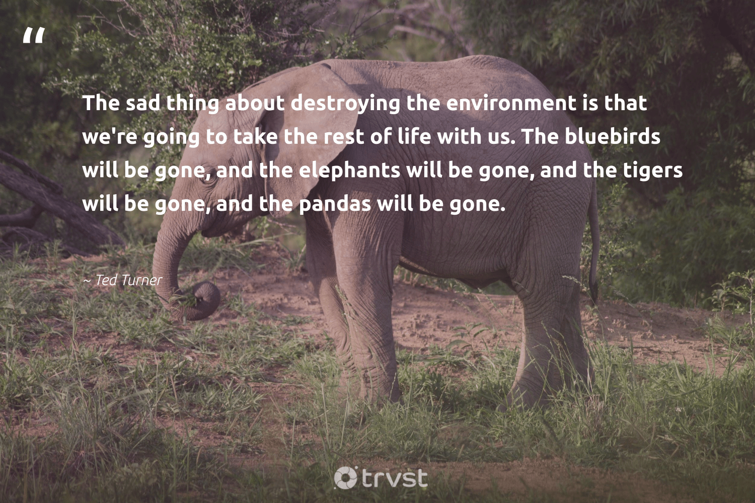 """""""The sad thing about destroying the environment is that we're going to take the rest of life with us. The bluebirds will be gone, and the elephants will be gone, and the tigers will be gone, and the pandas will be gone.""""  - Ted Turner #trvst #quotes #environment #elephants #mothernature #elephant #sustainableliving #impact #conservation #elephantlover #volunteer #gogreen"""