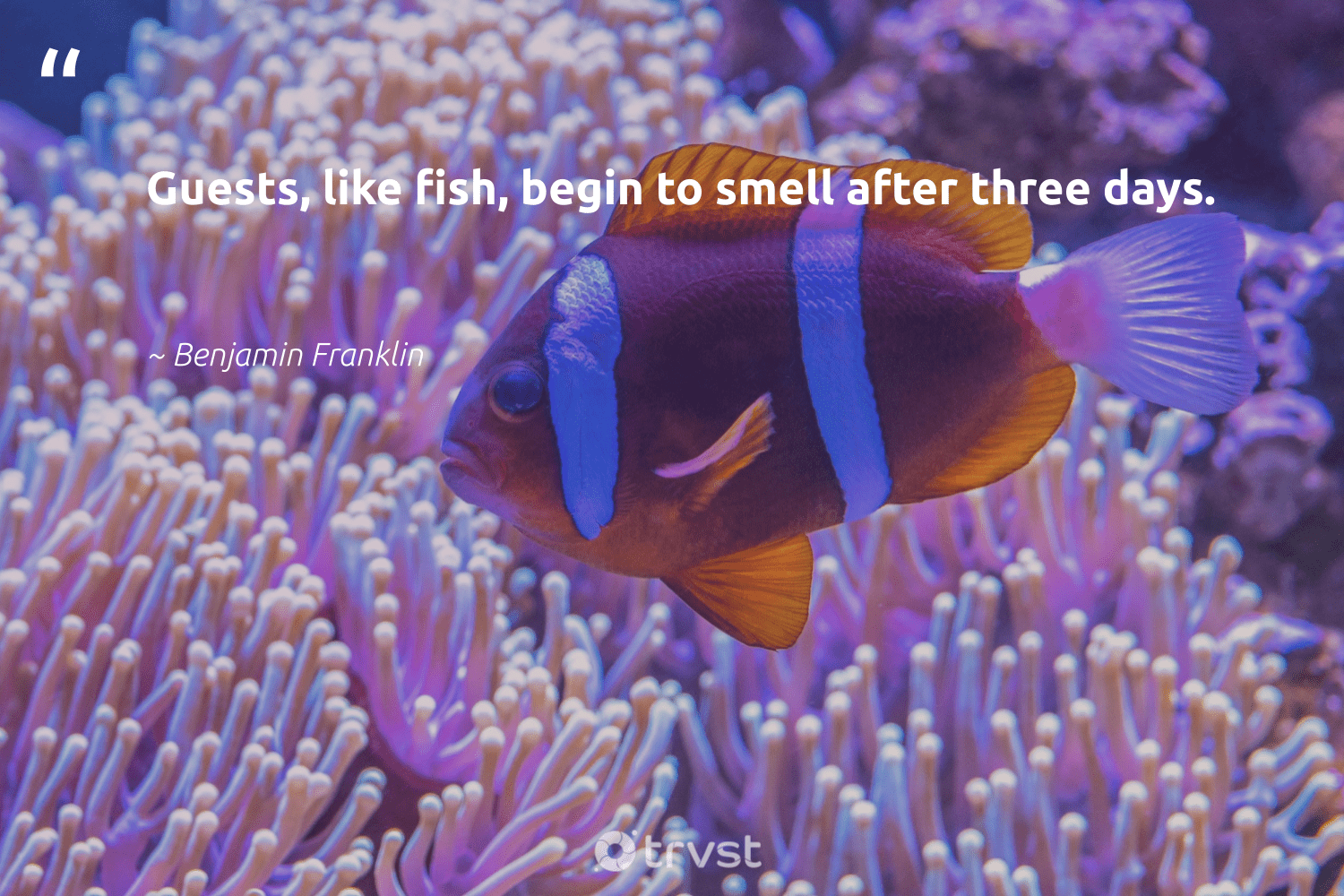 """""""Guests, like fish, begin to smell after three days.""""  - Benjamin Franklin #trvst #quotes #fish #sustainablefishing #changetheworld #perfectnature #socialimpact #amazingworld #planetearthfirst #sealife #collectiveaction #sustainability"""