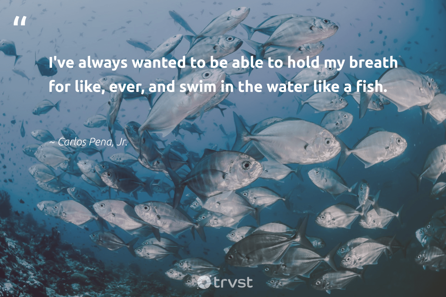 """""""I've always wanted to be able to hold my breath for like, ever, and swim in the water like a fish.""""  - Carlos Pena, Jr. #trvst #quotes #water #fish #oceanpollution #intheocean #volunteer #changetheworld #saveourocean #oceans #green #gogreen"""