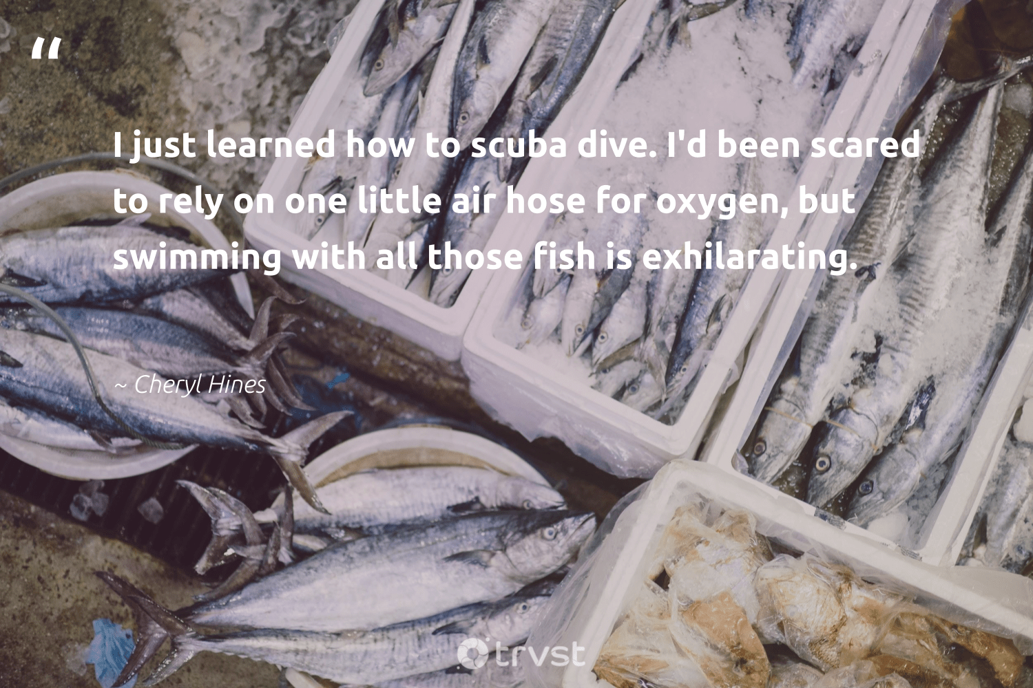 """""""I just learned how to scuba dive. I'd been scared to rely on one little air hose for oxygen, but swimming with all those fish is exhilarating.""""  - Cheryl Hines #trvst #quotes #fish #scuba #scubadiving #protectnature #natural #dogood #marine #wildlife #biology #takeaction"""