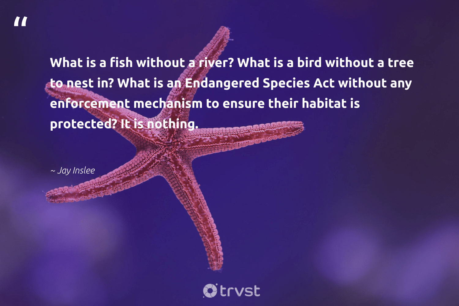 """""""What is a fish without a river? What is a bird without a tree to nest in? What is an Endangered Species Act without any enforcement mechanism to ensure their habitat is protected? It is nothing.""""  - Jay Inslee #trvst #quotes #river #fish #bird #endangeredspecies #endangered #rarespecies #ocean #healthyocean #geology #dosomething"""