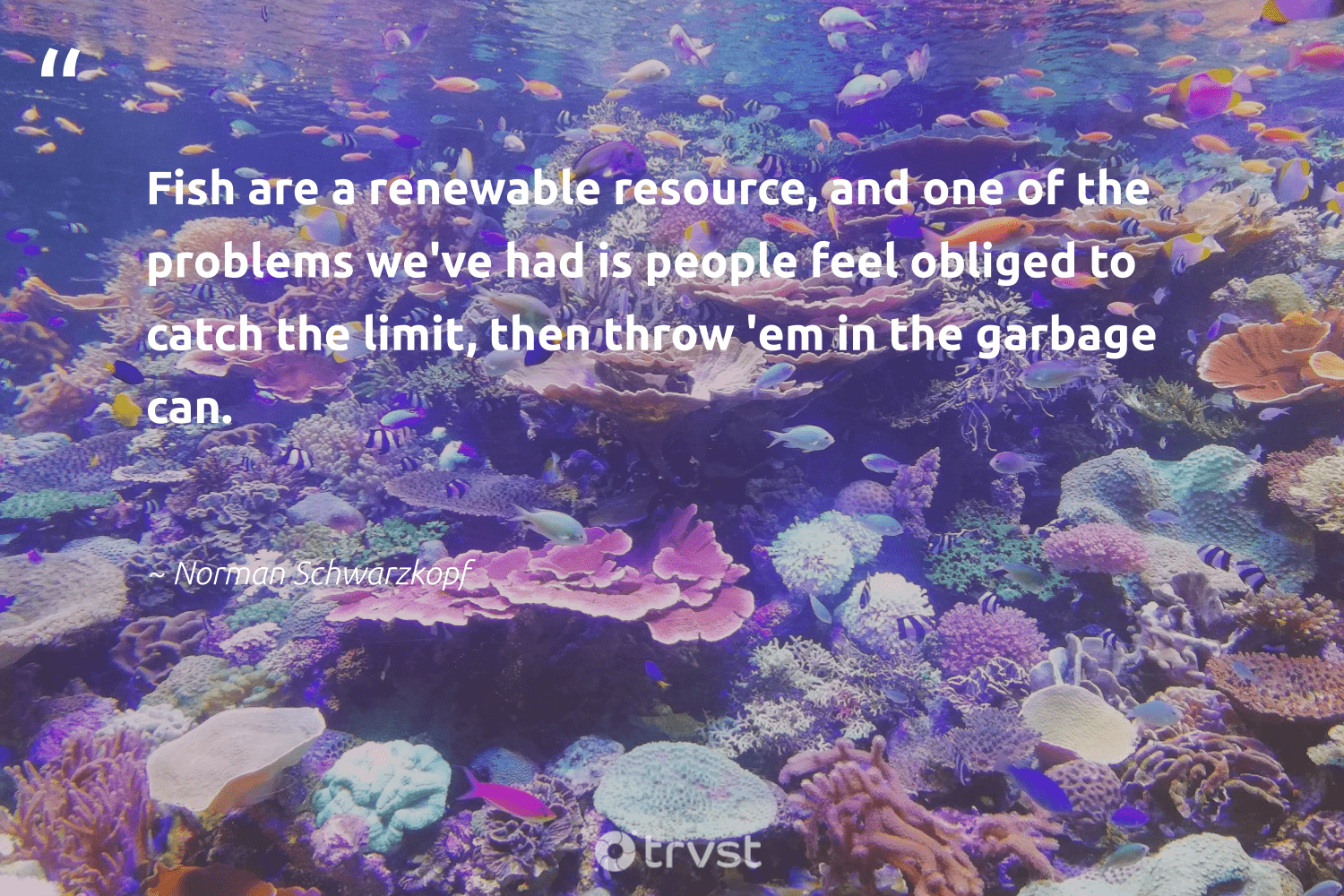 """""""Fish are a renewable resource, and one of the problems we've had is people feel obliged to catch the limit, then throw 'em in the garbage can.""""  - Norman Schwarzkopf #trvst #quotes #garbage #renewable #fish #lowcarbon #savetheoceans #climatechange #collectiveaction #cleanenergy #perfectnature #sustainability"""