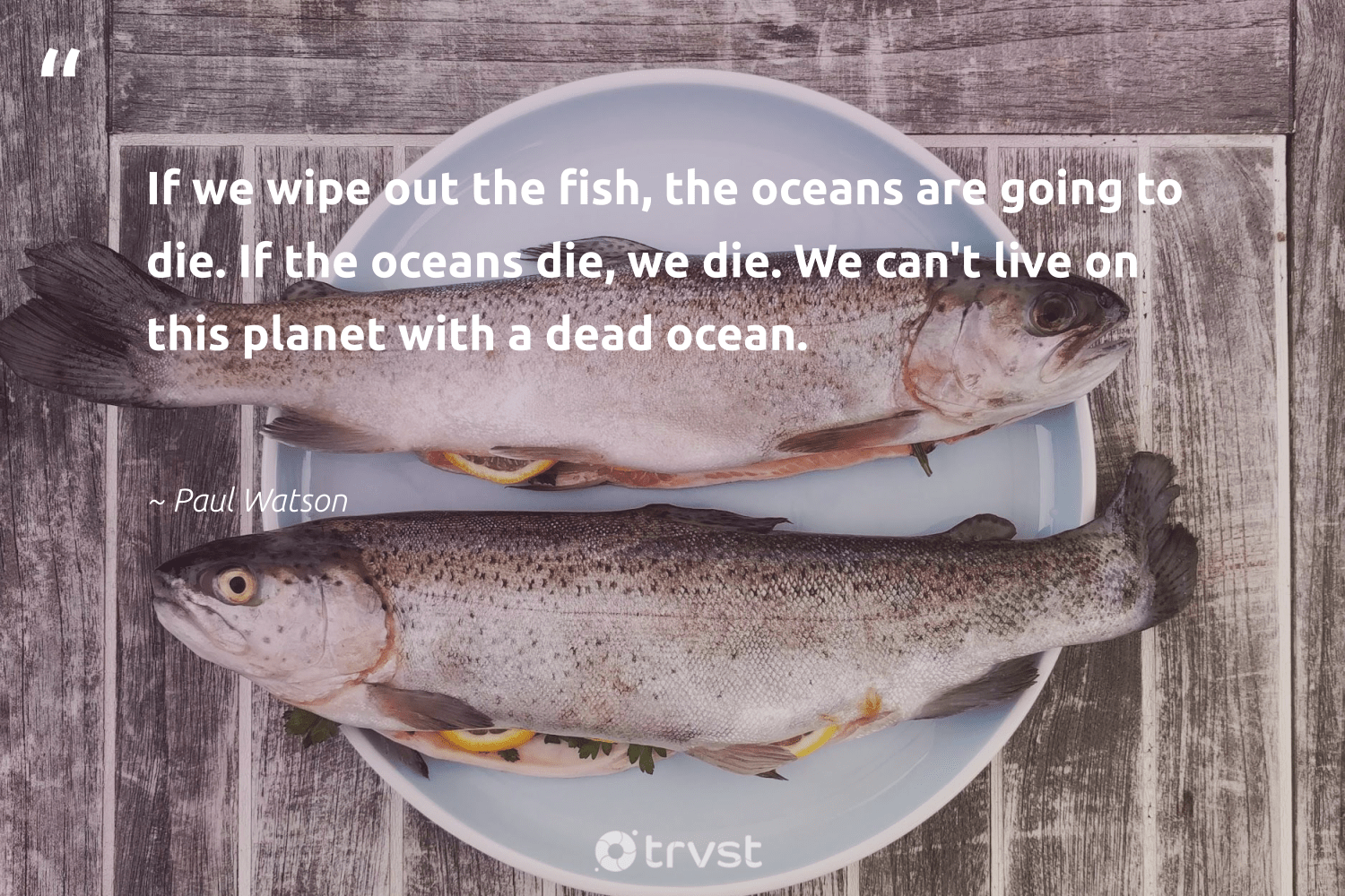 """""""If we wipe out the fish, the oceans are going to die. If the oceans die, we die. We can't live on this planet with a dead ocean.""""  - Paul Watson #trvst #quotes #planet #ocean #fish #oceans #environment #sealife #volunteer #ecoconscious #mothernature #marinelife"""