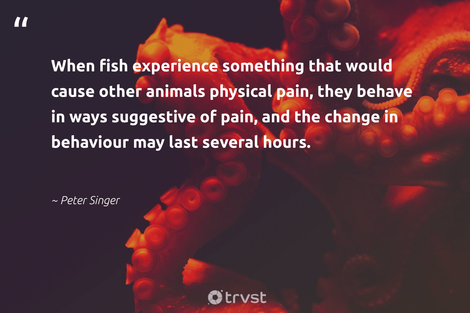 """""""When fish experience something that would cause other animals physical pain, they behave in ways suggestive of pain, and the change in behaviour may last several hours.""""  - Peter Singer #trvst #quotes #fish #animals #cause #animallovers #conservation #biology #bethechange #animal #nature #geology"""