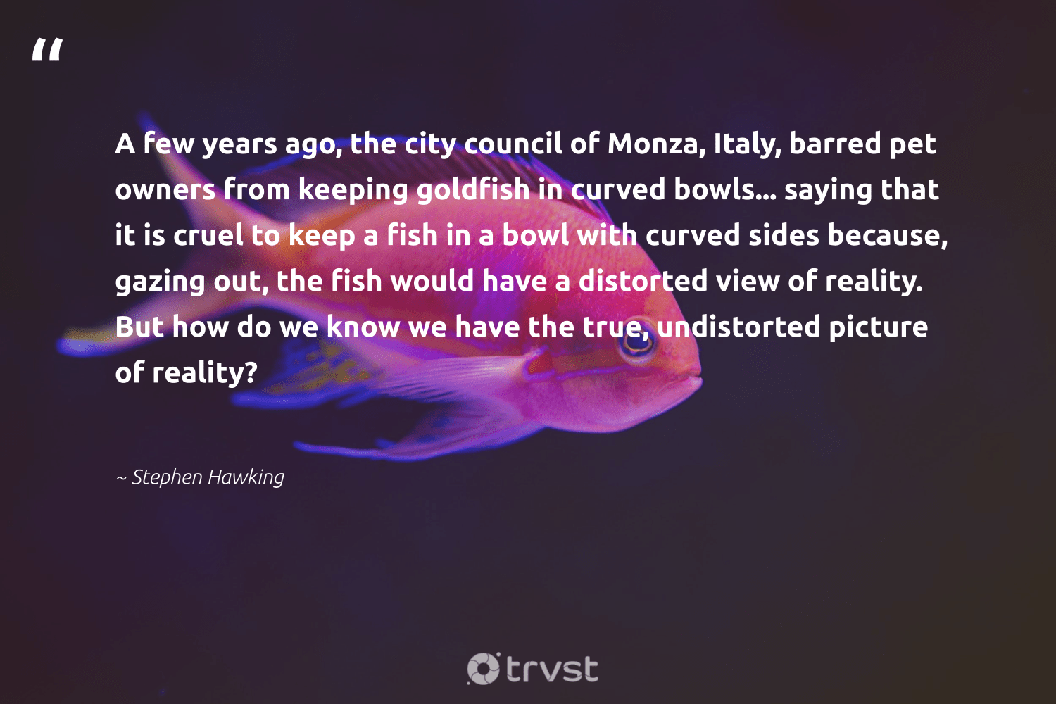 """""""A few years ago, the city council of Monza, Italy, barred pet owners from keeping goldfish in curved bowls... saying that it is cruel to keep a fish in a bowl with curved sides because, gazing out, the fish would have a distorted view of reality. But how do we know we have the true, undistorted picture of reality?""""  - Stephen Hawking #trvst #quotes #fish #intheocean #dogood #conservation #changetheworld #oceanlove #bethechange #wildlifeprotection #collectiveaction #perfectnature"""