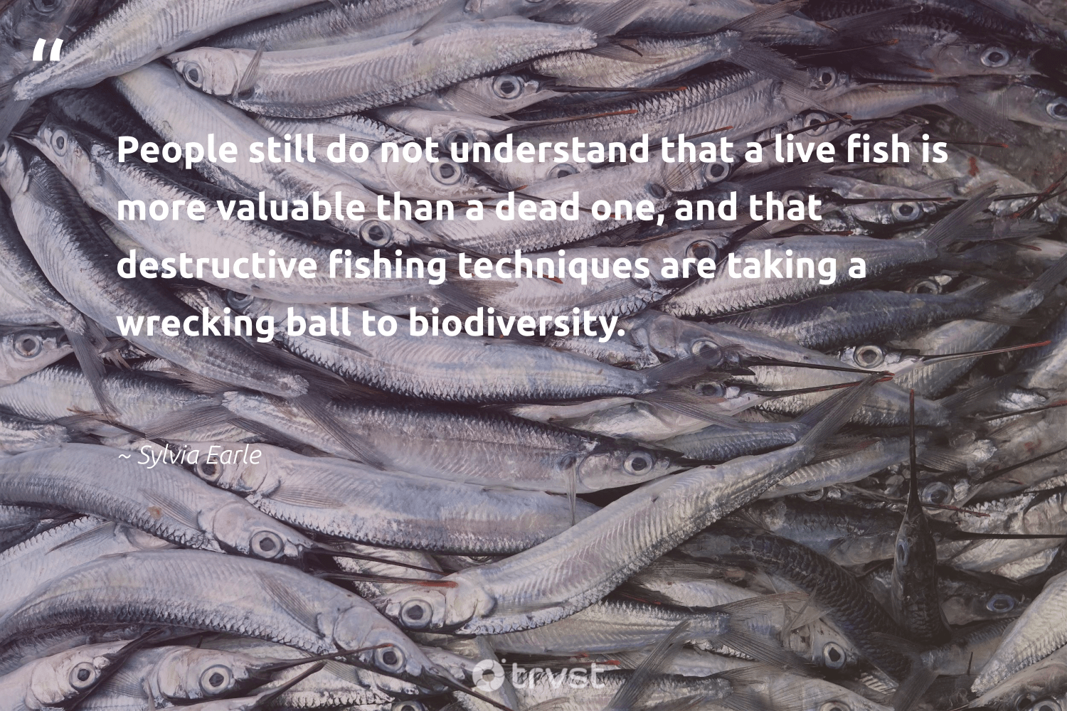 """""""People still do not understand that a live fish is more valuable than a dead one, and that destructive fishing techniques are taking a wrecking ball to biodiversity.""""  - Sylvia Earle #trvst #quotes #fishing #fish #biodiversity #conservation #wildlife #natural #bethechange #nature #perfectnature #geology"""