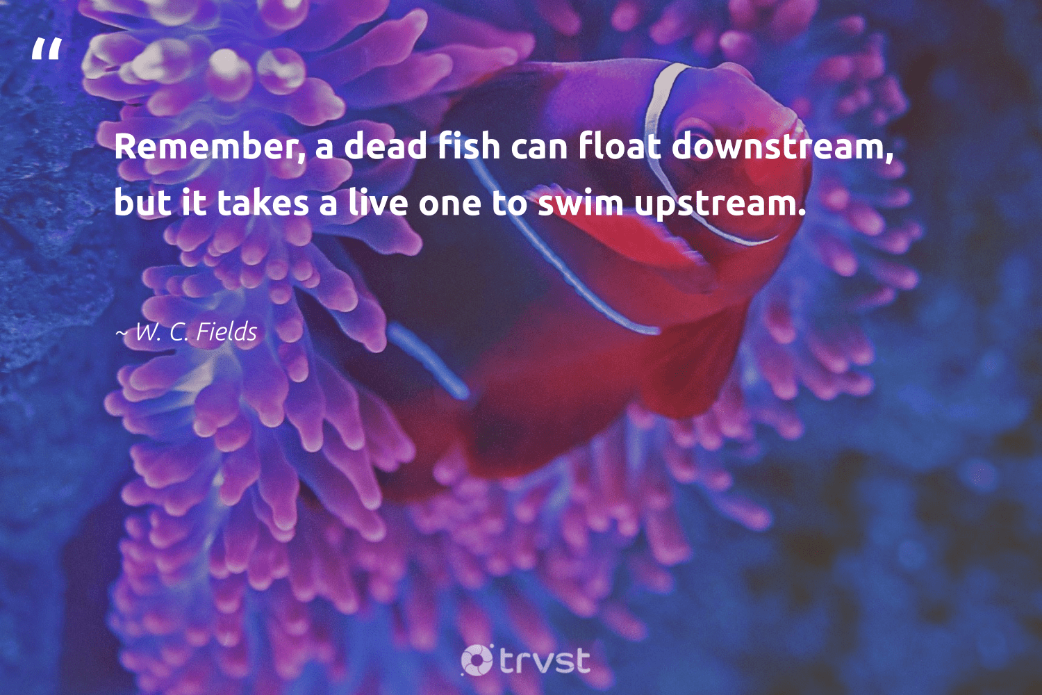 """""""Remember, a dead fish can float downstream, but it takes a live one to swim upstream.""""  - W. C. Fields #trvst #quotes #fish #wildlifeprotection #socialimpact #perfectnature #collectiveaction #oceanconservation #socialchange #conservation #dogood #oceanlove"""