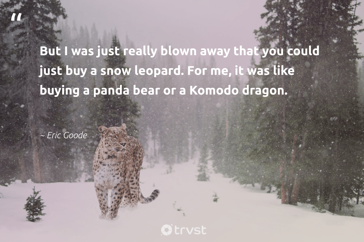 """""""But I was just really blown away that you could just buy a snow leopard. For me, it was like buying a panda bear or a Komodo dragon.""""  - Eric Goode #trvst #quotes #snow #leopard #bear #hurricane #conservation #savetheplanet #ecoconscious #flooding #perfectnature #earth"""