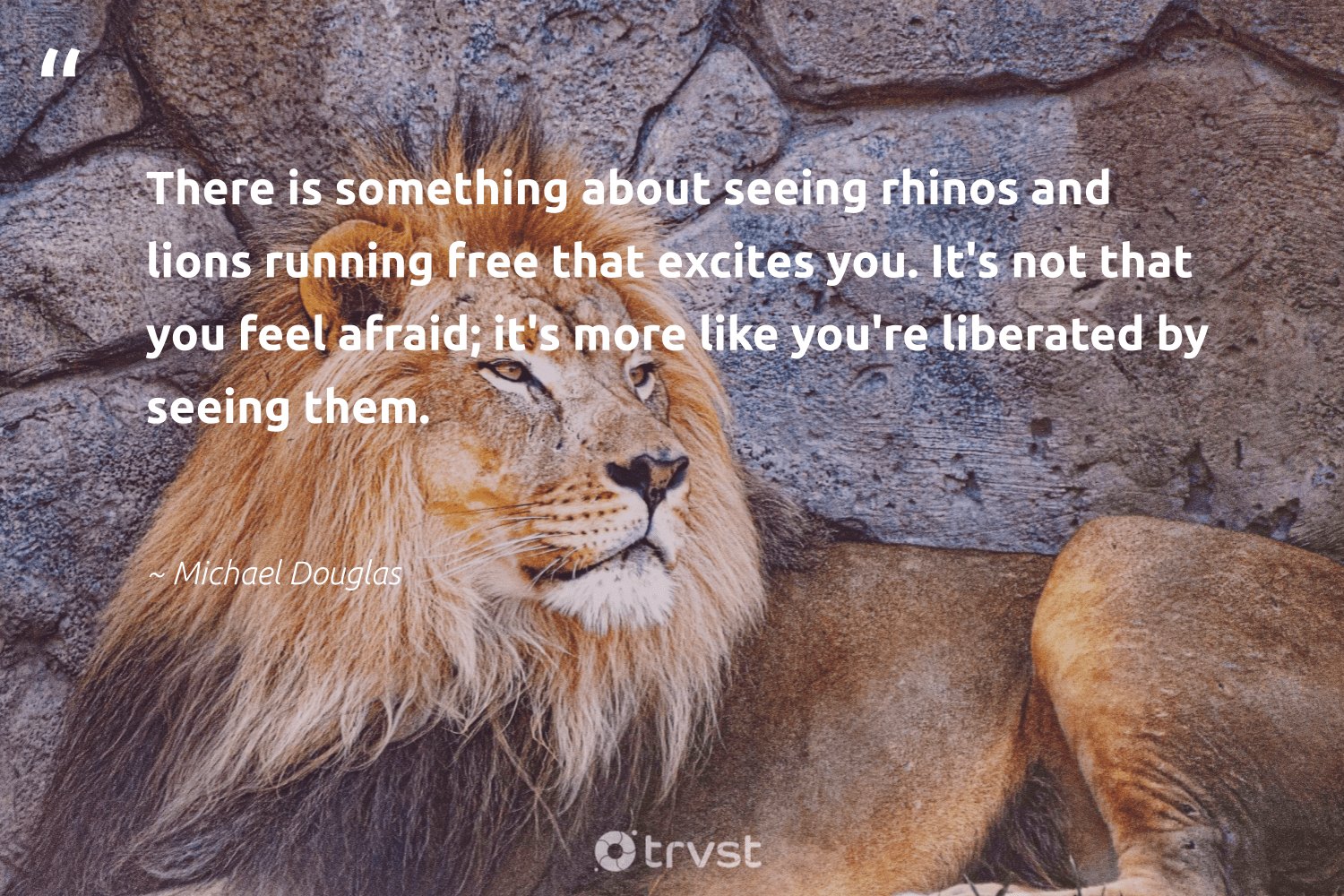 """""""There is something about seeing rhinos and lions running free that excites you. It's not that you feel afraid; it's more like you're liberated by seeing them.""""  - Michael Douglas #trvst #quotes #lions #protectnature #beinspired #amazingworld #dogood #wildlifeprotection #gogreen #wild #impact #perfectnature"""