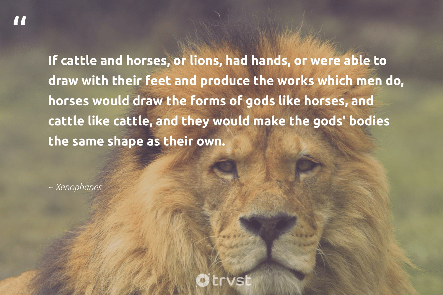 """""""If cattle and horses, or lions, had hands, or were able to draw with their feet and produce the works which men do, horses would draw the forms of gods like horses, and cattle like cattle, and they would make the gods' bodies the same shape as their own.""""  - Xenophanes #trvst #quotes #lions #biodiversity #beinspired #conservation #changetheworld #perfectnature #bethechange #protectnature #socialimpact #wild"""