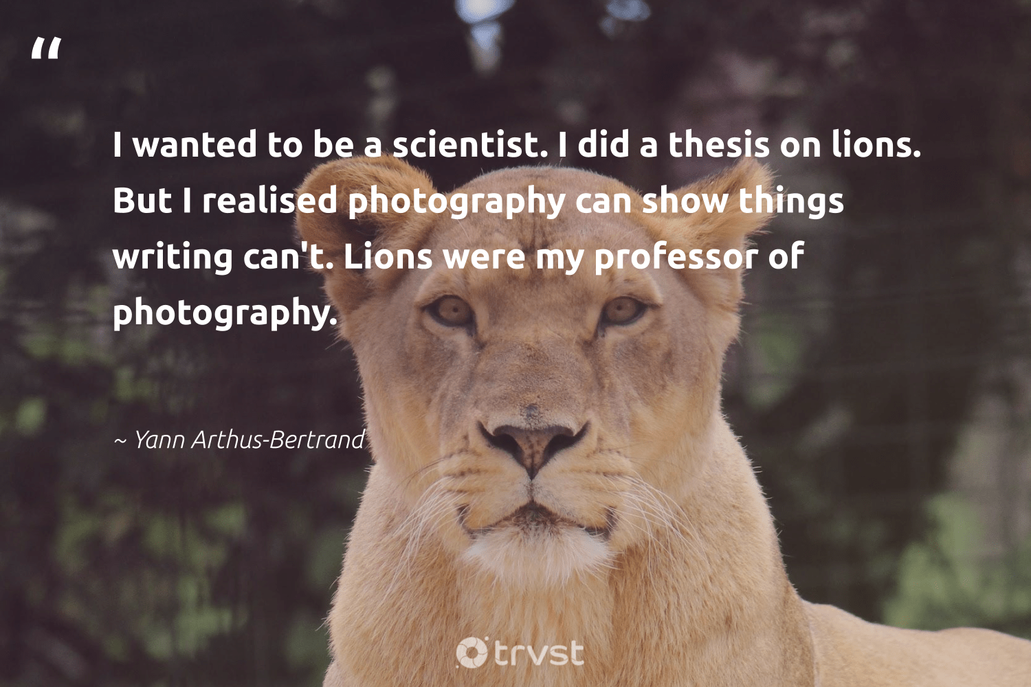 """""""I wanted to be a scientist. I did a thesis on lions. But I realised photography can show things writing can't. Lions were my professor of photography.""""  - Yann Arthus-Bertrand #trvst #quotes #lions #protectnature #dotherightthing #bigcats #gogreen #biodiversity #takeaction #sustainability #beinspired #perfectnature"""