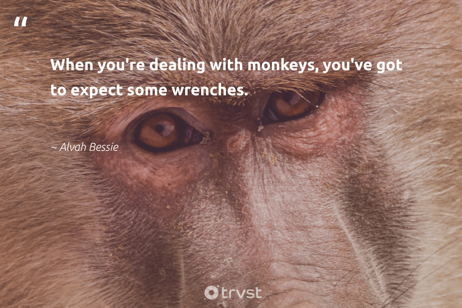 """When you're dealing with monkeys, you've got to expect some wrenches.""  - Alvah Bessie #trvst #quotes #monkeys #conservation #planetearthfirst #wild #bethechange #sustainability #ecoconscious #perfectnature #impact #wildlifeprotection"