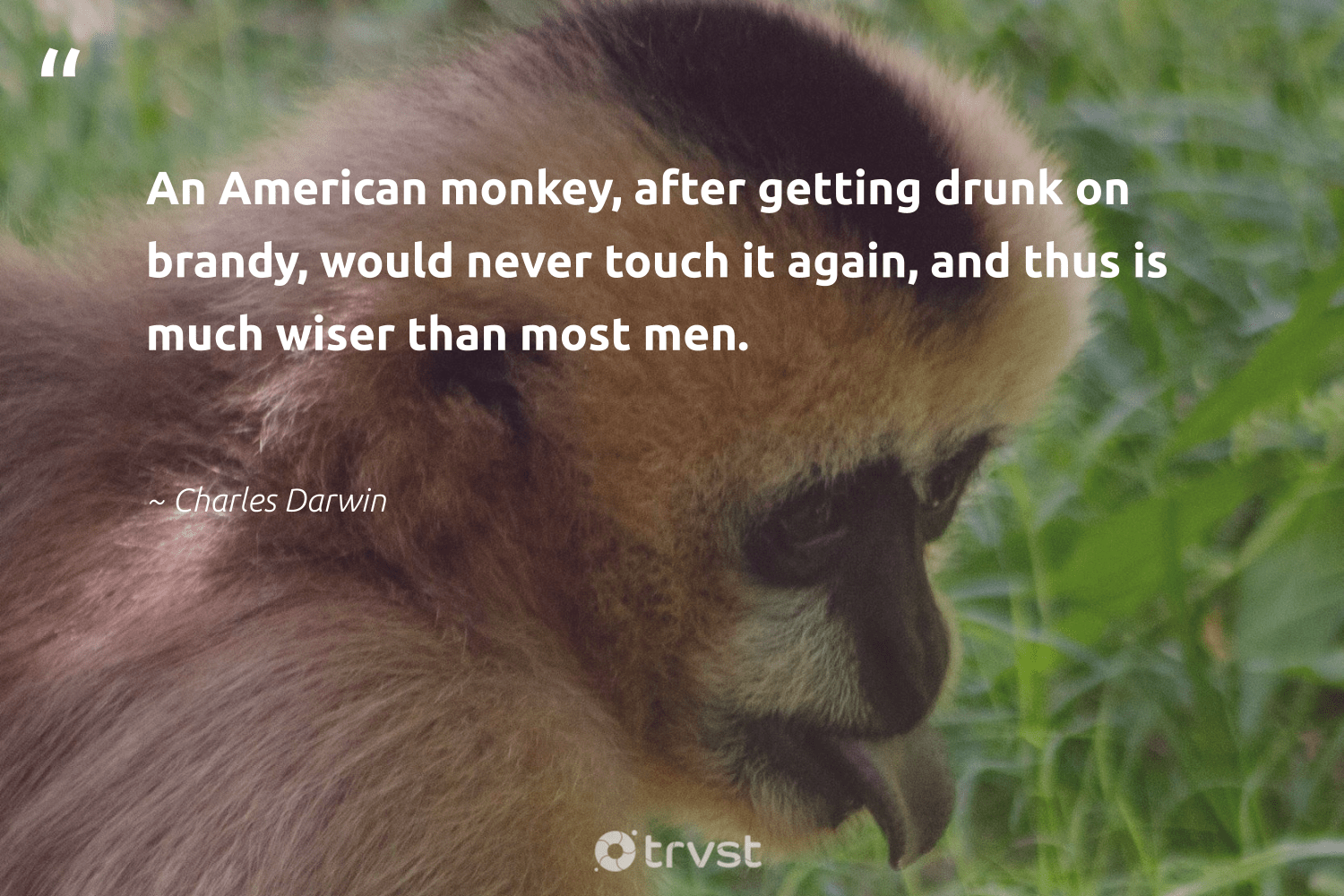 """An American monkey, after getting drunk on brandy, would never touch it again, and thus is much wiser than most men.""  - Charles Darwin #trvst #quotes #monkey #wild #thinkgreen #animalphotography #impact #splendidanimals #collectiveaction #wildlifeprotection #bethechange #majesticwildlife"