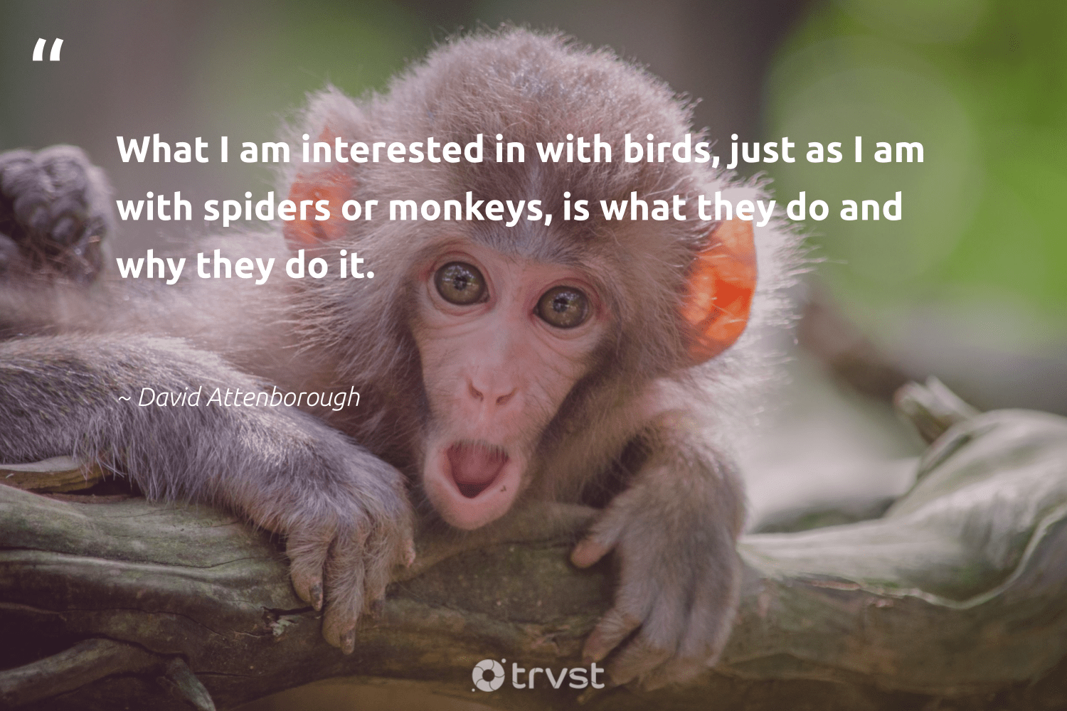 """What I am interested in with birds, just as I am with spiders or monkeys, is what they do and why they do it.""  - David Attenborough #trvst #quotes #birds #monkeys #bird #conservation #nature #gogreen #monkey #geology #bethechange #wild"