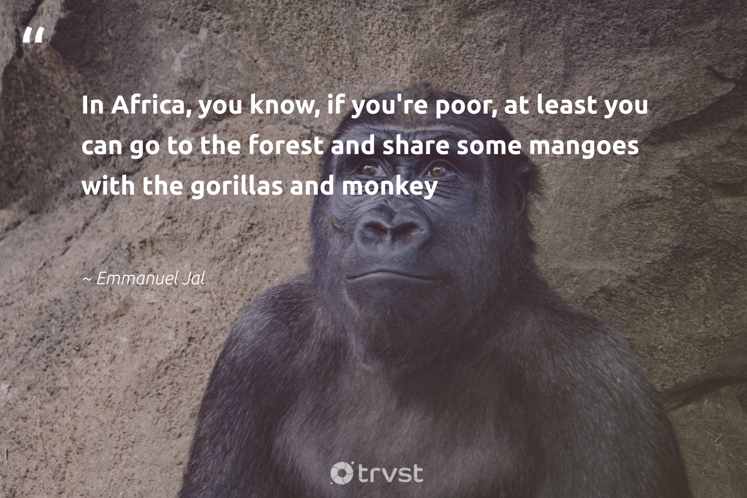 """In Africa, you know, if you're poor, at least you can go to the forest and share some mangoes with the gorillas and monkey""  - Emmanuel Jal #trvst #quotes #africa #forest #poor #monkey #deforestation #wildlifeprotection #gogreen #bethechange #treeplanting #splendidanimals"
