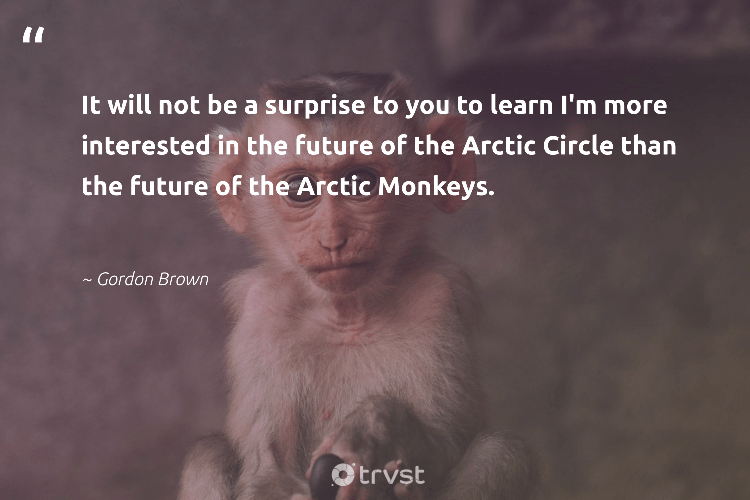 """It will not be a surprise to you to learn I'm more interested in the future of the Arctic Circle than the future of the Arctic Monkeys.""  - Gordon Brown #trvst #quotes #arctic #monkeys #majesticwildlife #bethechange #monkey #planetearthfirst #wildlifeprotection #thinkgreen #biodiversity #dogood"
