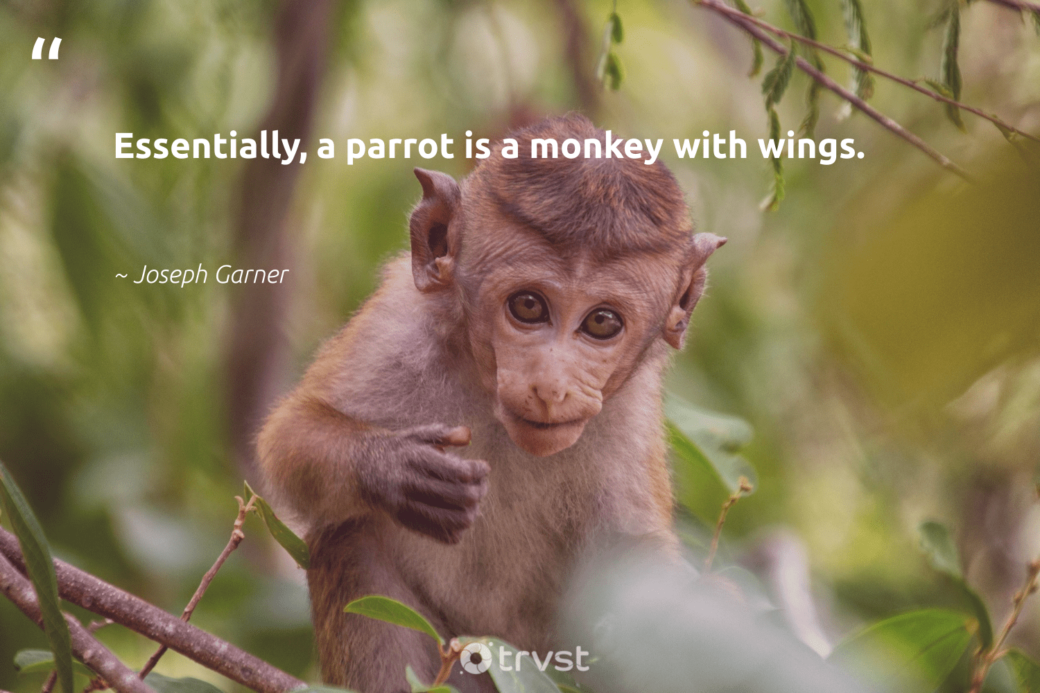 """Essentially, a parrot is a monkey with wings.""  - Joseph Garner #trvst #quotes #parrot #monkey #protectnature #ecoconscious #wild #dotherightthing #biodiversity #bethechange #majesticwildlife #gogreen"