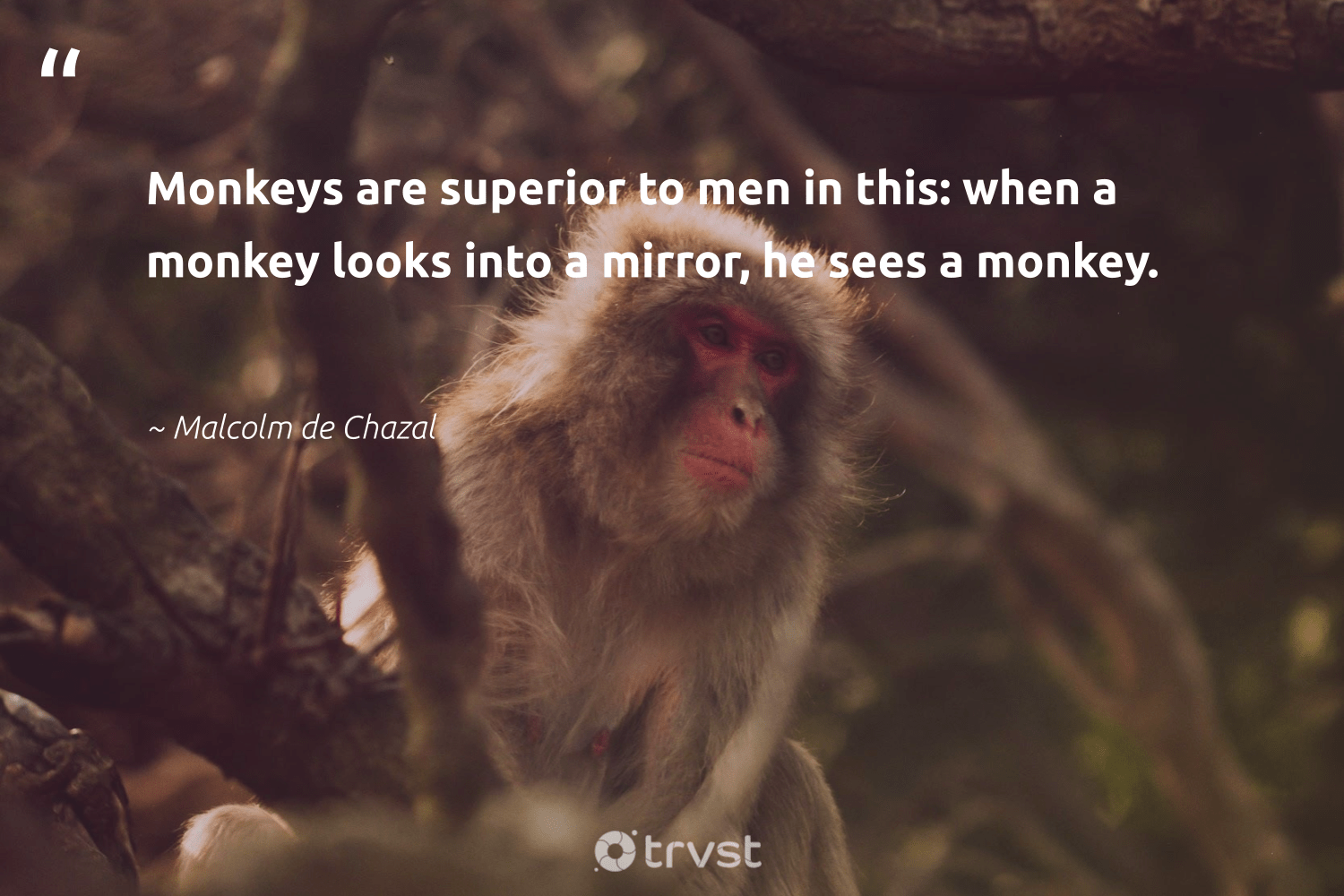 """Monkeys are superior to men in this: when a monkey looks into a mirror, he sees a monkey.""  - Malcolm de Chazal #trvst #quotes #monkey #monkeys #monkeylife #ecoconscious #perfectnature #takeaction #wild #beinspired #splendidanimals #socialimpact"