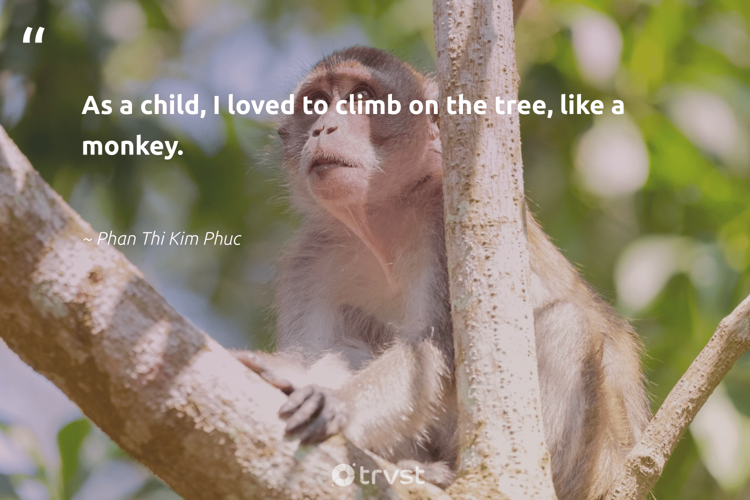 """As a child, I loved to climb on the tree, like a monkey.""  - Phan Thi Kim Phuc #trvst #quotes #monkey #tree #conservation #socialchange #majesticwildlife #beinspired #splendidanimals #bethechange #animalphotography #dotherightthing"
