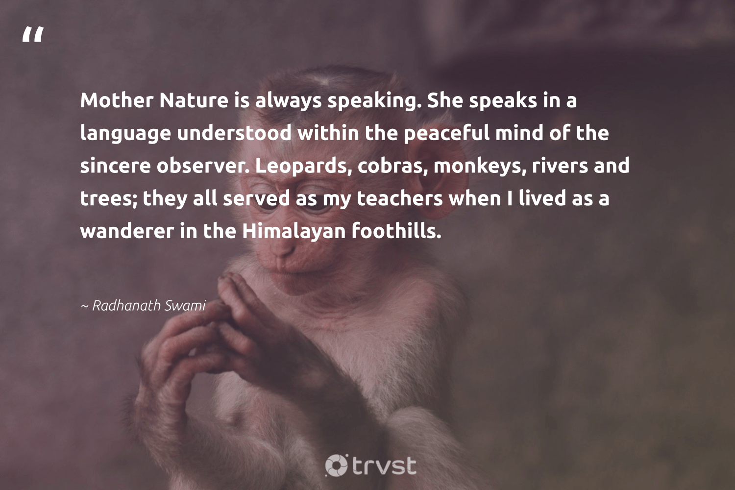 """Mother Nature is always speaking. She speaks in a language understood within the peaceful mind of the sincere observer. Leopards, cobras, monkeys, rivers and trees; they all served as my teachers when I lived as a wanderer in the Himalayan foothills.""  - Radhanath Swami #trvst #quotes #nature #rivers #mothernature #leopards #monkeys #environment #earth #perfectnature #noplanetb #changetheworld"