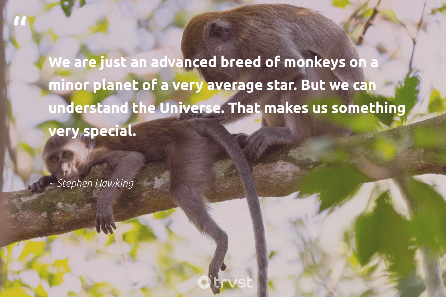 """We are just an advanced breed of monkeys on a minor planet of a very average star. But we can understand the Universe. That makes us something very special.""  - Stephen Hawking #trvst #quotes #planet #monkeys #earth #monkey #sustainability #beinspired #environment #monkeylife #wildlifeplanet #thinkgreen"