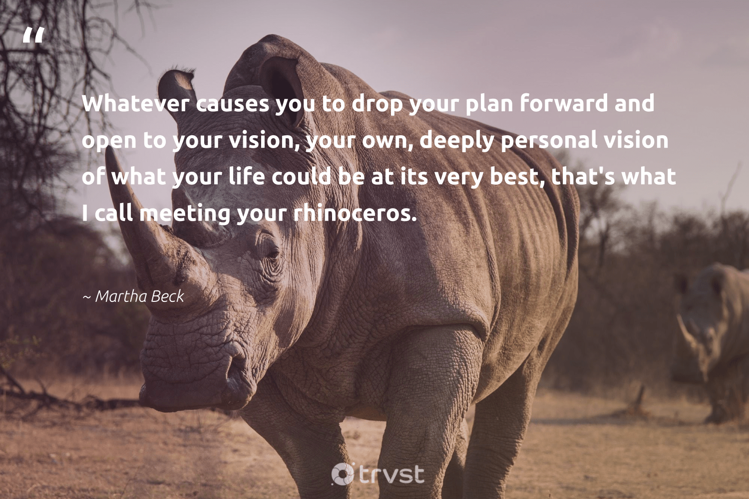 """""""Whatever causes you to drop your plan forward and open to your vision, your own, deeply personal vision of what your life could be at its very best, that's what I call meeting your rhinoceros.""""  - Martha Beck #trvst #quotes #causes #rhinoceros #life #NGO #perfectnature #communities #changetheworld #Charity #biodiversity #society"""