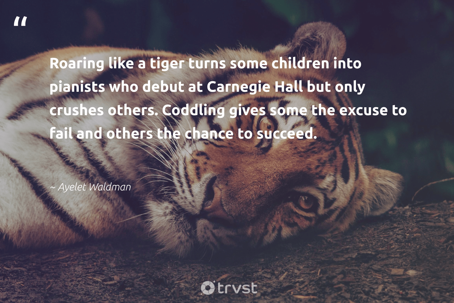 """Roaring like a tiger turns some children into pianists who debut at Carnegie Hall but only crushes others. Coddling gives some the excuse to fail and others the chance to succeed.""  - Ayelet Waldman #trvst #quotes #tiger #children #biodiversity #dogood #wildlifeprotection #bethechange #ourplanetdaily #gogreen #tigers #beinspired"