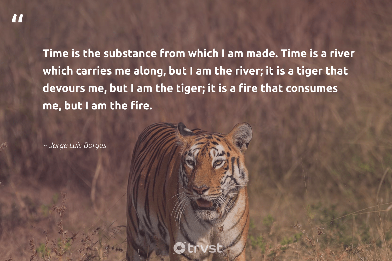 """Time is the substance from which I am made. Time is a river which carries me along, but I am the river; it is a tiger that devours me, but I am the tiger; it is a fire that consumes me, but I am the fire.""  - Jorge Luis Borges #trvst #quotes #river #tiger #water #protectnature #environmentallyfriendly #collectiveaction #oceanpollution #splendidanimals #volunteer #bethechange"