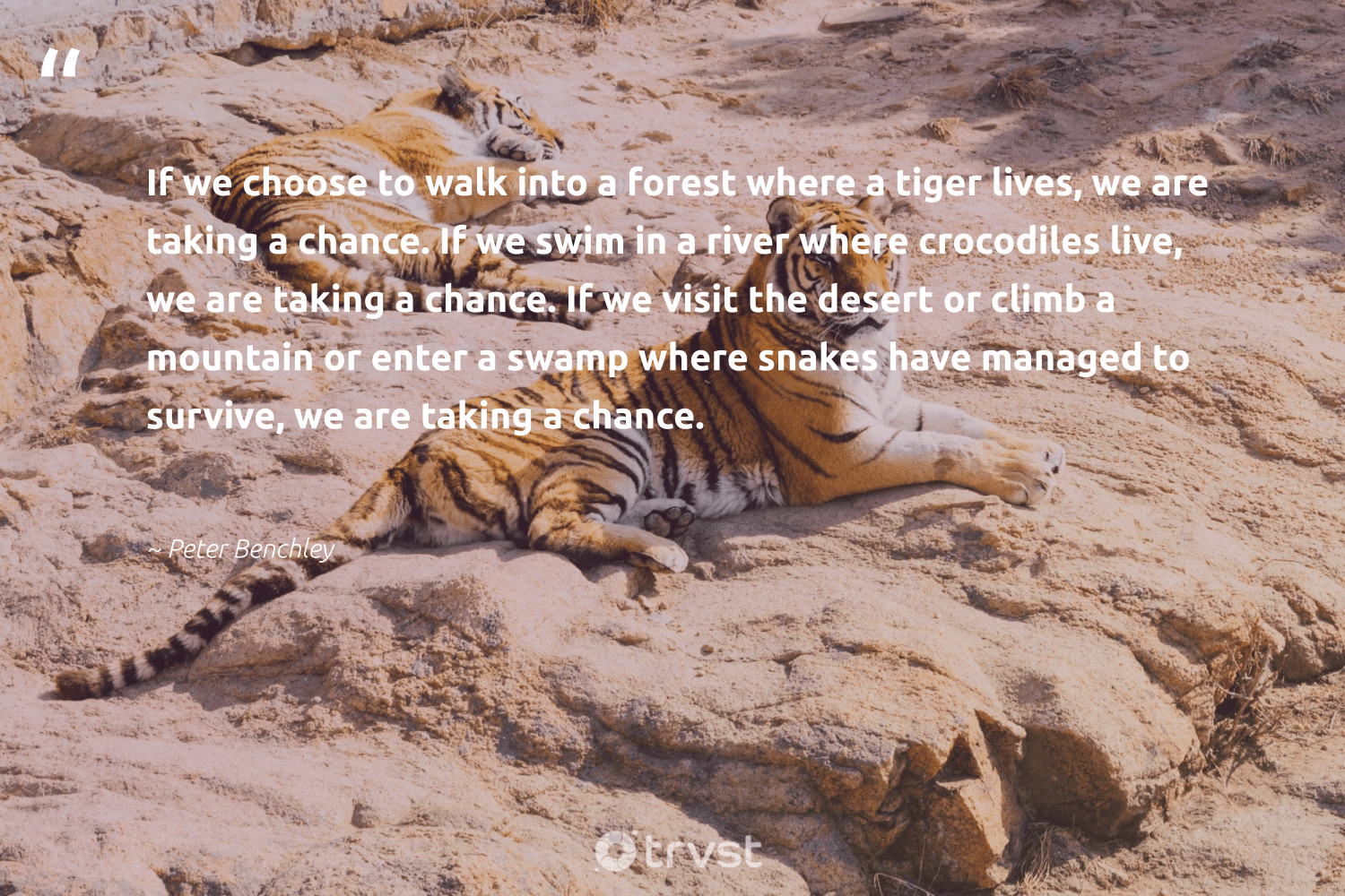 """If we choose to walk into a forest where a tiger lives, we are taking a chance. If we swim in a river where crocodiles live, we are taking a chance. If we visit the desert or climb a mountain or enter a swamp where snakes have managed to survive, we are taking a chance.""  - Peter Benchley #trvst #quotes #river #mountain #forest #tiger #treeplanting #biodiversity #green #dosomething #trees #ourplanetdaily"