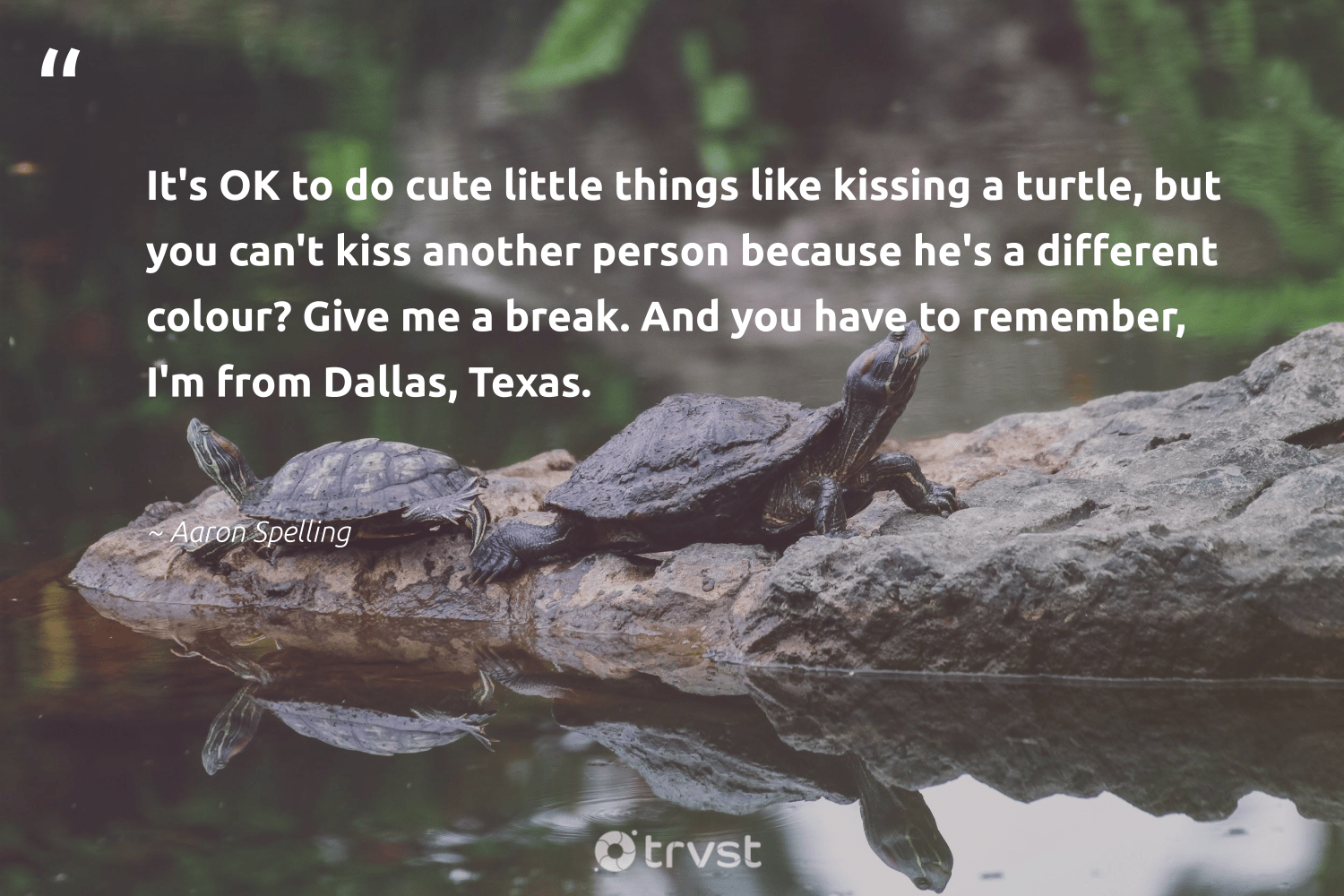 """It's OK to do cute little things like kissing a turtle, but you can't kiss another person because he's a different colour? Give me a break. And you have to remember, I'm from Dallas, Texas.""  - Aaron Spelling #trvst #quotes #turtle #turtles #collectiveaction #savetheturtle #dogood #wildlife #thinkgreen #oceanconservation #ecoconscious #biodiversity"