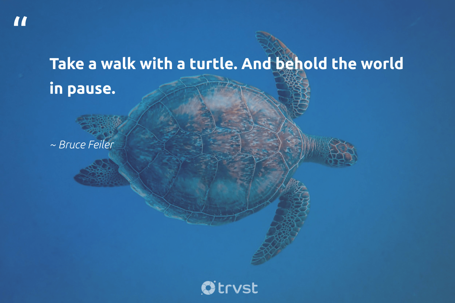 """Take a walk with a turtle. And behold the world in pause.""  - Bruce Feiler #trvst #quotes #turtle #wildlifeprotection #thinkgreen #savetheoceans #gogreen #perfectnature #collectiveaction #marinelife #ecoconscious #aquaticlife"