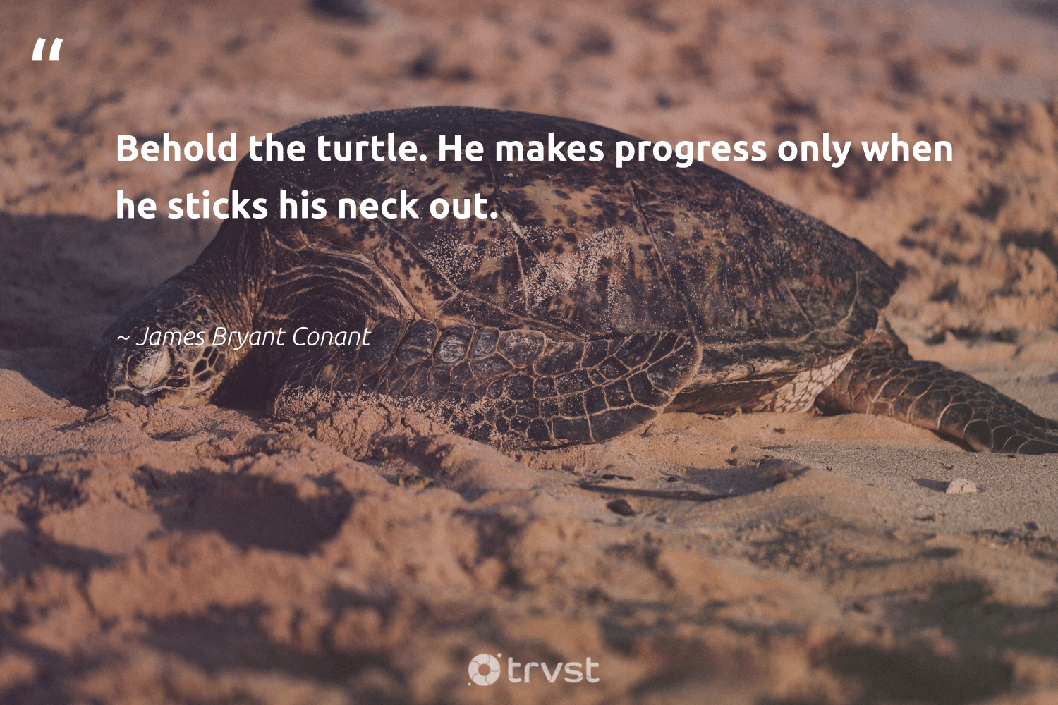 """Behold the turtle. He makes progress only when he sticks his neck out.""  - James Bryant Conant #trvst #quotes #turtle #oceans #bethechange #oceanconservation #changetheworld #aquaticlife #beinspired #amazingworld #collectiveaction #savetheturtle"