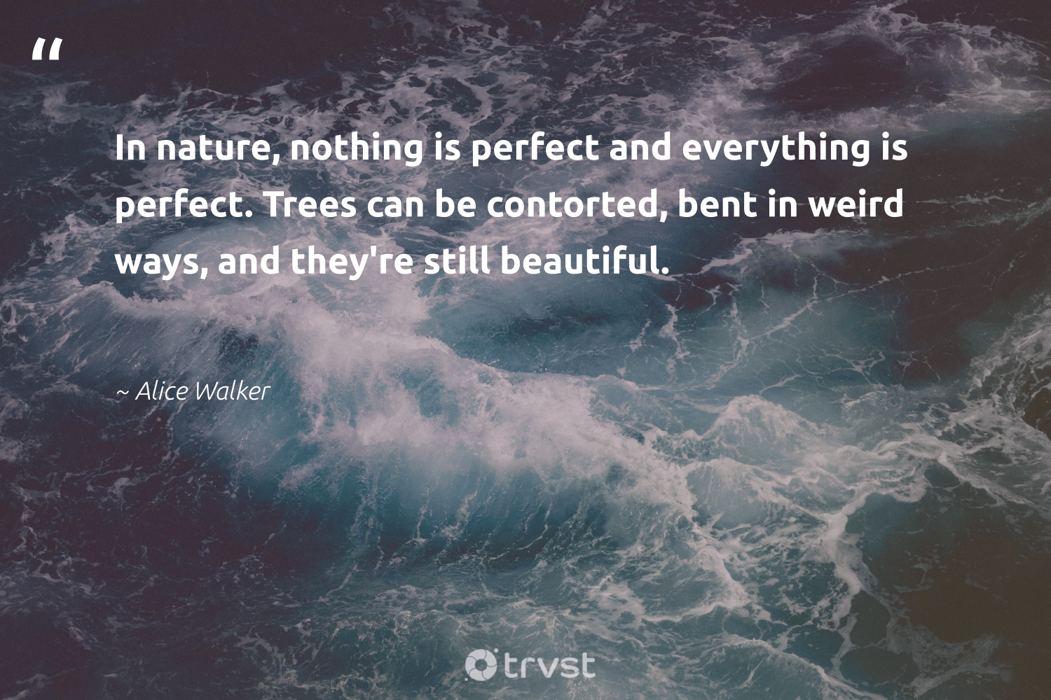 """""""In nature, nothing is perfect and everything is perfect. Trees can be contorted, bent in weird ways, and they're still beautiful.""""  - Alice Walker #trvst #quotes #environment #nature #trees #earth #gogreen #climatechange #dogood #conservation #volunteer #giveback"""