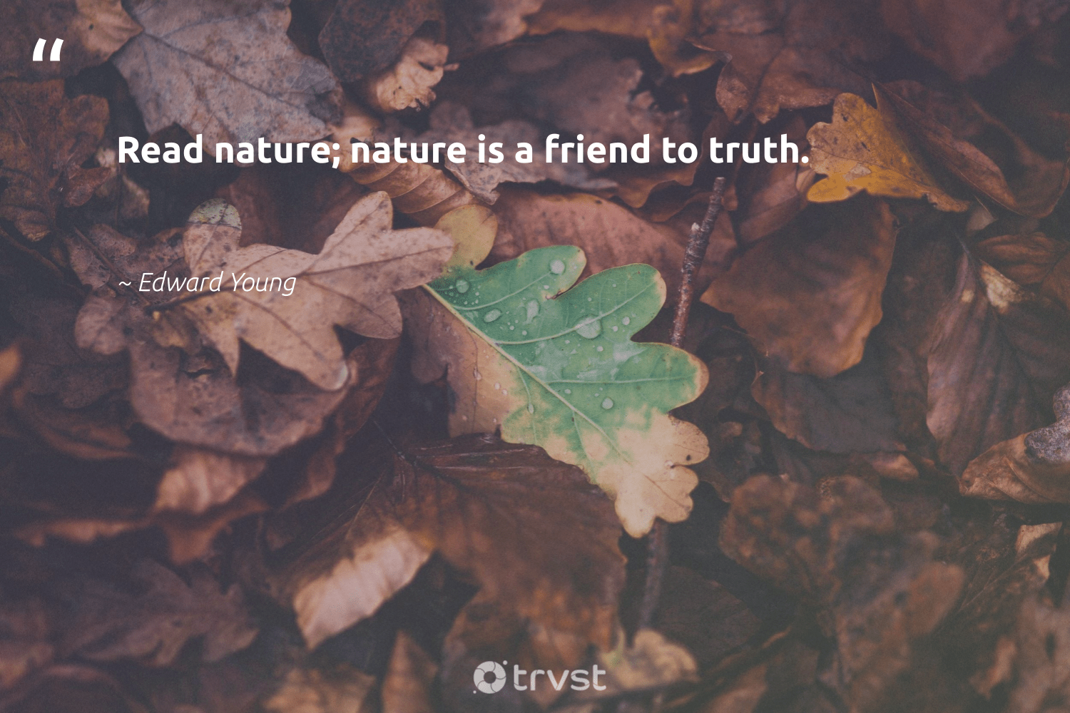 """""""Read nature; nature is a friend to truth.""""  - Edward Young #trvst #quotes #environment #nature #truth #earth #giveback #green #gogreen #conservation #environmentallyfriendly #sustainability"""