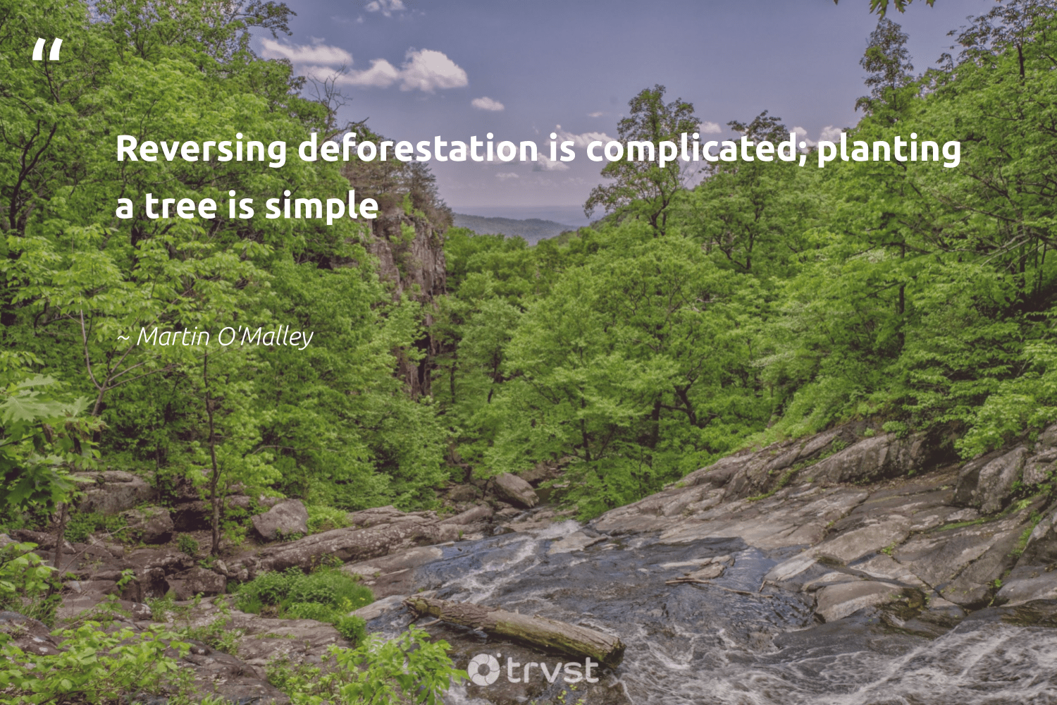 """Reversing deforestation is complicated; planting a tree is simple""  - Martin O'Malley #trvst #quotes"