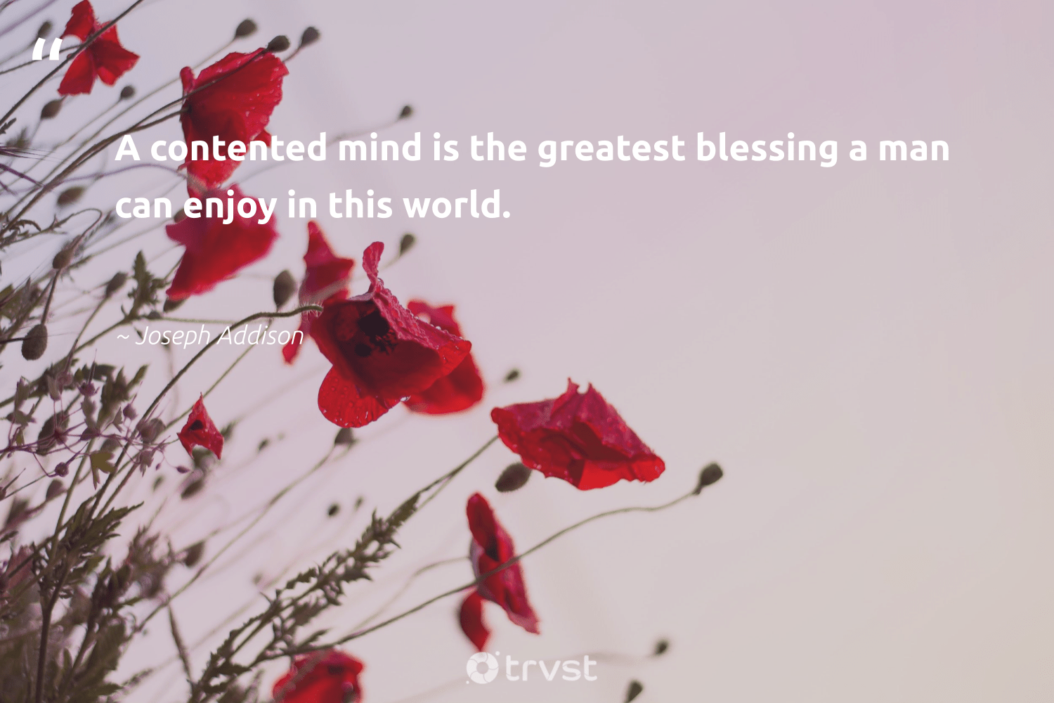 """""""A contented mind is the greatest blessing a man can enjoy in this world.""""  - Joseph Addison #trvst #quotes #begreat #impact #changemakers #collectiveaction #health #bethechange #mindset #socialimpact #nevergiveup #dotherightthing"""