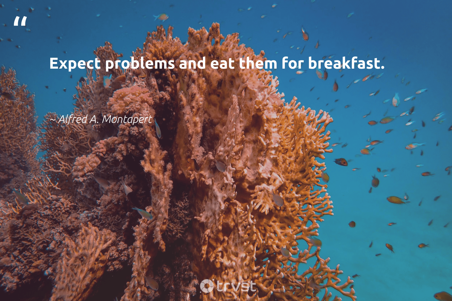 """Expect problems and eat them for breakfast.""  - Alfred A. Montapert #trvst #quotes #ethicalbusiness #socialimpact #betterplanet #dotherightthing #socialchange #bethechange #dogood #beinspired #weareallone #impact"