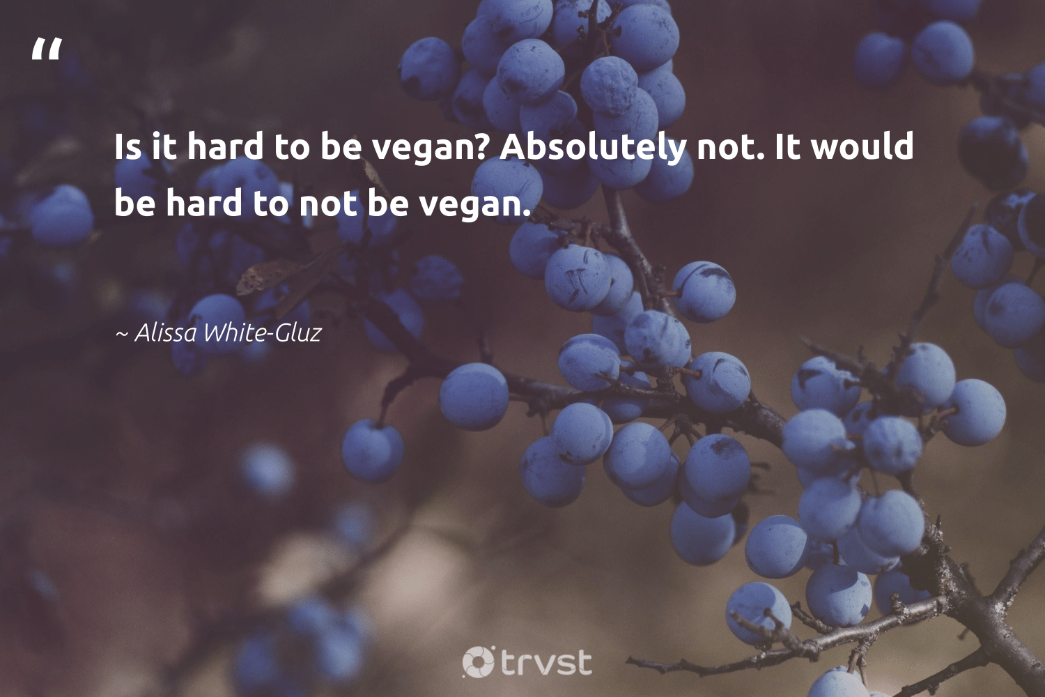 """Is it hard to be vegan? Absolutely not. It would be hard to not be vegan.""  - Alissa White-Gluz #trvst #quotes #vegan #veganfood #greenliving #green #gogreen #vegetarian #sustainability #fashion #bethechange #plantbased"