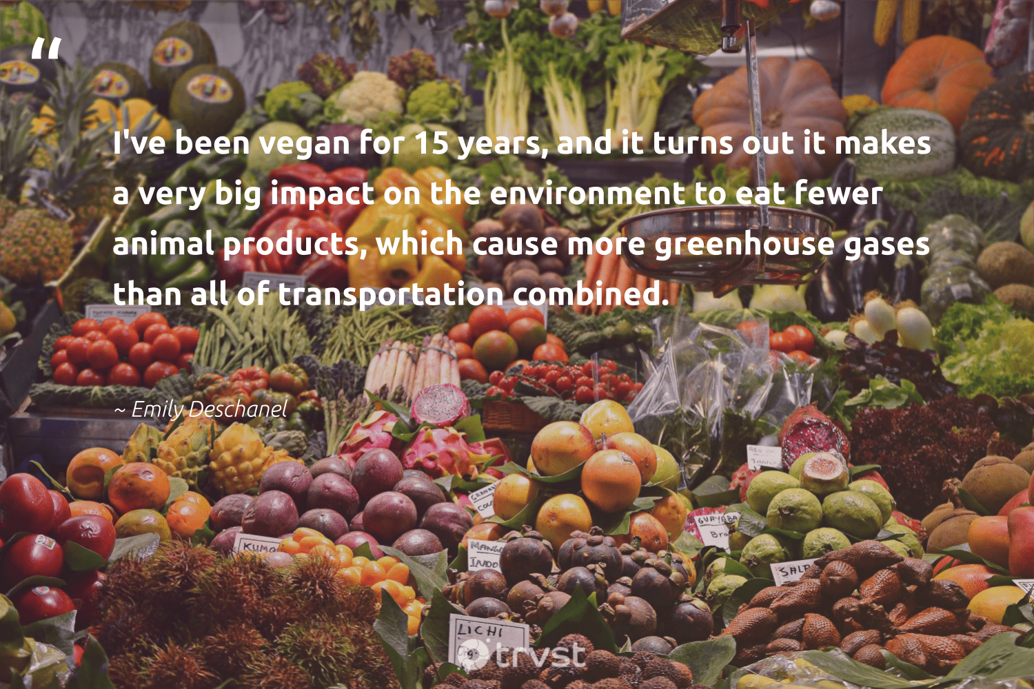"""I've been vegan for 15 years, and it turns out it makes a very big impact on the environment to eat fewer animal products, which cause more greenhouse gases than all of transportation combined.""  - Emily Deschanel #trvst #quotes #impact #environment #animal #cause #vegan #earth #sustainable #naturelovers #socialchange #mothernature"