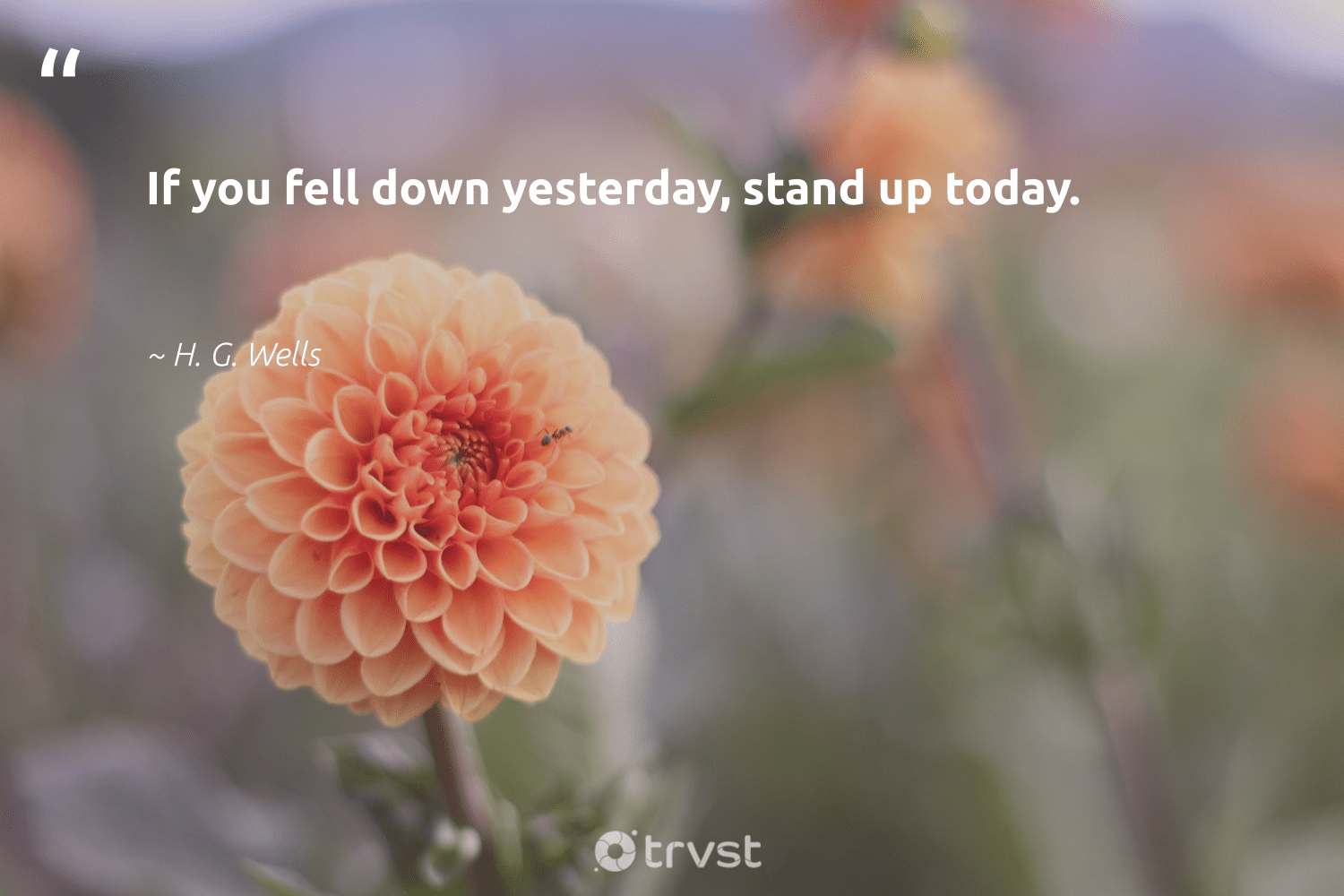 """If you fell down yesterday, stand up today.""  - H. G. Wells #trvst #quotes #softskills #dogood #futureofwork #gogreen #nevergiveup #thinkgreen #begreat #impact #ecoconscious #bethechange"