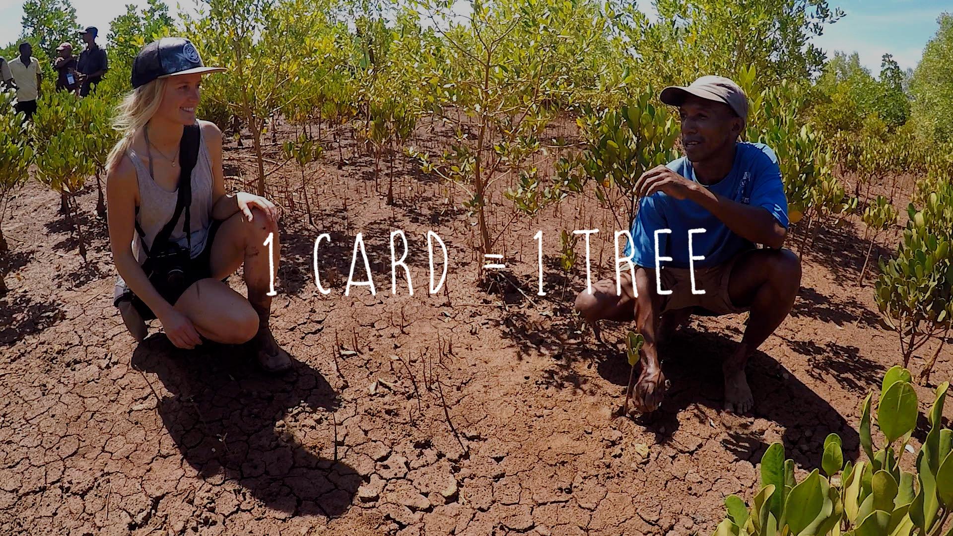 Reforestation in Africa